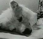 dogsoviet
