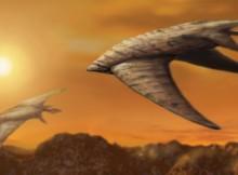 flyingcreature