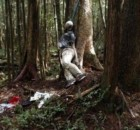 Aokigahara-forest-of-suicides-000