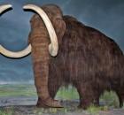 mamutas2
