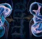 organai