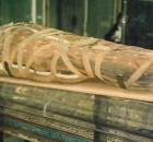 egyptian-mummy_lightbox