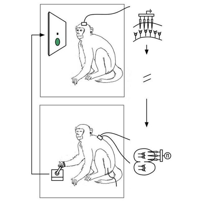 2-1-Z. Williams et al. Nature Communications