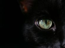 mystic-cat