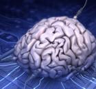 brain-net