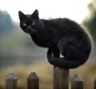 A cat sits on a fence post at the childr