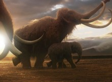 Mammoth- CGI still of Mammoths