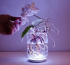 augalai-energija