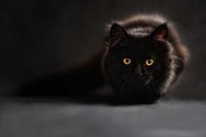 Kiekviena save gerbianti ragana laiko namie bent vieną katę, nes šie gyvūnai turi gebėjimą sugerti neigiamą energiją, mato anapusinio pasaulio sutvėrimus, dvasias. Tikriausiai esate ne karto pastebėję, jog katė įsitaiso ant skaudančios kūno dallies ir skausmas išgaruoja. Nuo gilios senovės katės buvo laikomos šventais ir magiškais gyvūnais. Su šiuo naminiu gyvūnu siejama daug tikėjimų, burtų. Jis tarsi laidininkas tarp žemiškojo ir anapusinio pasaulio. Daug kur, katės tiesiog uždaromos, kai namuose yra pašarvotas velionis, nes jei katė paliestų lavoną, tai pirmas žmogus, kurį ji sutiktų eidama – apaktų.