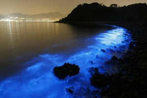hong-kongas-vanduo