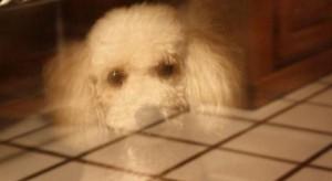 suns-vaiduoklis