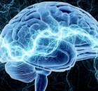 zmogaus-smegenys