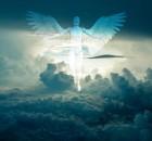 angelai-dangus