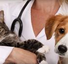 katinas-suo-terapija