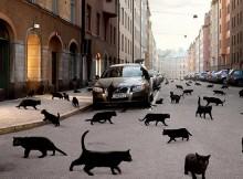 katinai-kelias