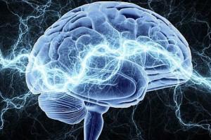smegenys-faktai