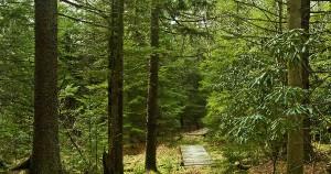 Medis – tai dažniausiai didelis, daugiametis, lapus metantis ar visžalis sumedėjęs augalas, kurių augantys masyvai vadinami miškais. Medžiai paplitę visuose žemynuose išskyrus Antarktidą. Nors nėra nustatyto minimalaus aukščio, paprastai medžiams priskiriami aukštesni nei 6 m augalai, turintys iš kamieno atsišakojusias antrines šakas. Tačiau ir bonsai laikomi medžiais, nors ir nesiekia metro aukščio. Dabartinių Lietuvoje augančių medžių bendrijos formavosi maždaug prieš 10 tūkstančių metų po paskutinio ledynmečio periodo. Tirpstant ledynams, palaipsniui ėmė formuotis ir anksčiau augusios, bet ledynų nustumtos į pietus medžių rūšys.