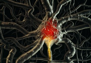 brain-cells-neurons-time_21689_600x450