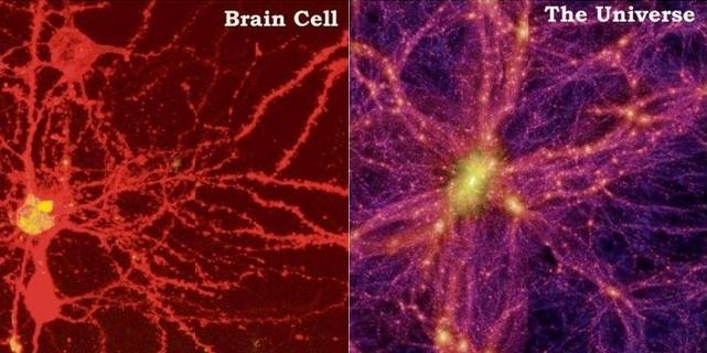 smegenys-visata