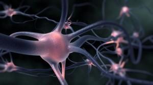 neuron_thumb