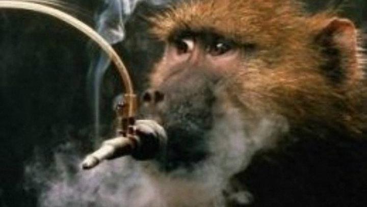 cigaretes-gyvunai4