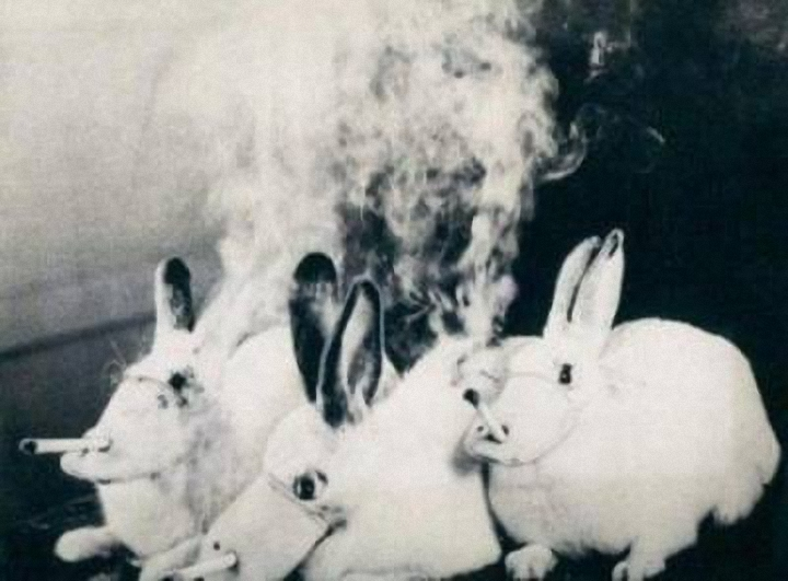 cigaretes-gyvunai5