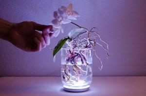 Augalai, augalų karalystė (Plantae) yra didelė gyvųjų organizmų grupė, kuriai priklauso tokie plačiai paplitę organizmai kaip medžiai, žolės, gėlės. Augalai yra eukariotai, t. y. turintys tikrąjį branduolį organizmai. Manoma, kad augalų rūšių yra apie 350 000. 2004 m. buvo identifikuotos 287 655 rūšys. Augalus tiria daug mokslų: bendrosios botanikos, augalų anatomijos, augalų fiziologijos, augalų sistematikos. Yra specialieji mokslai skirti tik vienai augalų grupei tirti, pavyzdžiui, dendrologija tiria tik sumedėjusius augalus, briologija – samanas ir kt. Augalus tiria daug mokslų: bendrosios botanikos, augalų anatomijos, augalų fiziologijos, augalų sistematikos. Augalai, augalų karalystė (Plantae) yra didelė gyvųjų organizmų grupė, kuriai priklauso tokie plačiai paplitę organizmai kaip medžiai, žolės, gėlės.