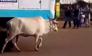 indijos-karve