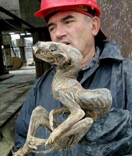 mumija-sachta2