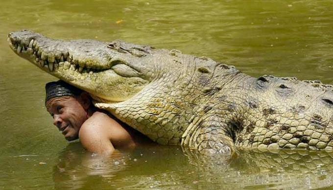 draugas-krokodilas