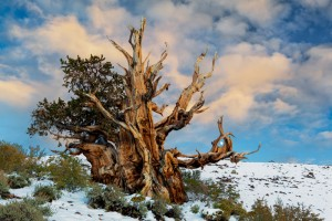 seniausias-medis